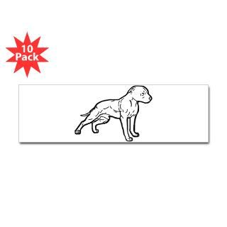 pitbull white Bumper Sticker (10 pk)
