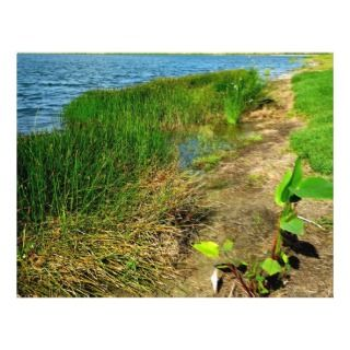 Grass sawgrass background florida plant custom flyer