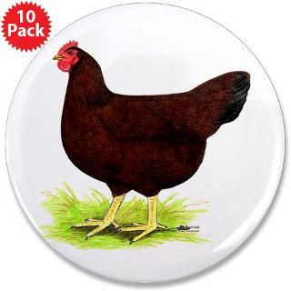 Rhode Island Red Hen : Diane Jacky On Line Catalog