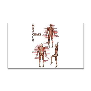 Muscle Chart Rectangle Sticker
