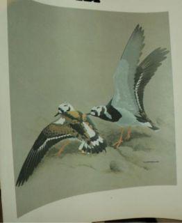 Print Rose Blue Herring Bird J F Fenwick Lansdowne