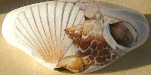 Seashell Ceramic Cabinet Drawer Pull Shell Pretty 3