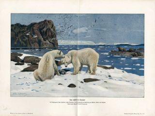 North Pole Arctic Bears Walrus Antique Litho Print H Kraemer