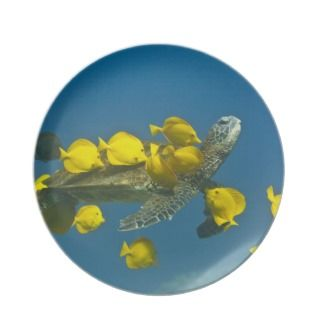 Green sea turtle with passengers dinner plate