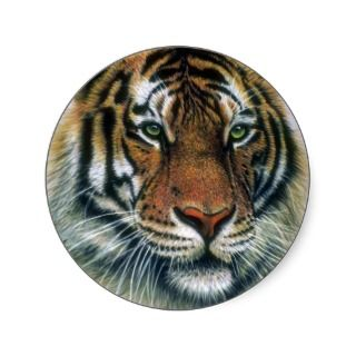 Siberian Tiger head Sticker