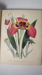 1841 JANE LOUDON FLOWER GARDEN  BULBOUS PLATES 1ST ED HAND COLORED