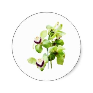 Green Cymbidium Orchids Round Sticker