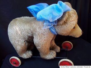 Vintage Steiff Teddy Bear on Wheels 1950s Hard Stuffed Riding Bear