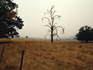 Dead Tree in Farmland Shrouded in the Haze of Wildfire Smoke, Australia Photographic Print by Jason Edwards