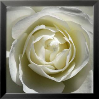 White Rose Pre made Frame