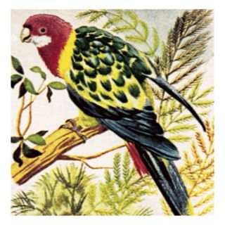 Broad Tailed Parrots Giclee Print by English School