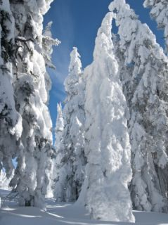 Hoar Frost Snow Covered Trees on Two Top Mountain, West Yellowstone, Montana, United States of Amer Photographic Print by Kimberly Walker