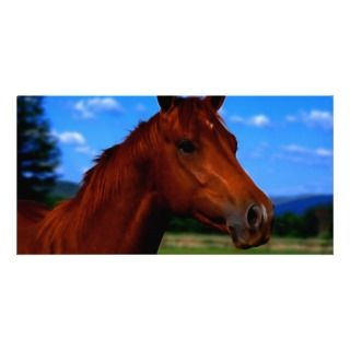 horse standing proud photo card template