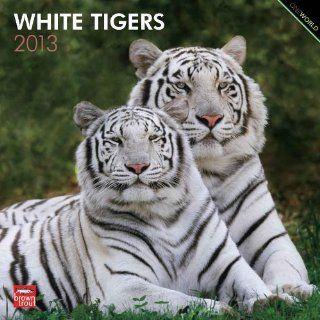 White Tigers 2013   Weiße Tiger   Original BrownTrout Kalender