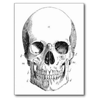 Skull Diagram Postcard