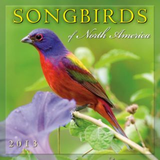 Songbirds of North America   2013 12 Month Calendar Calendars