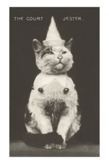 Cat with Pointed Hat, Court Jester Photo