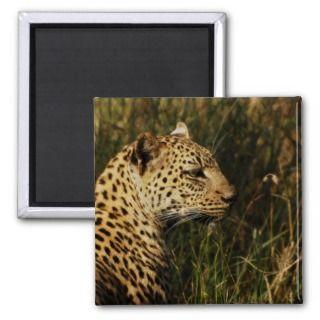 Leopard wild animal safari magnets (Africats)