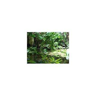 Pflanzenset für Regenwald Paludarium Terrarium: Haustier