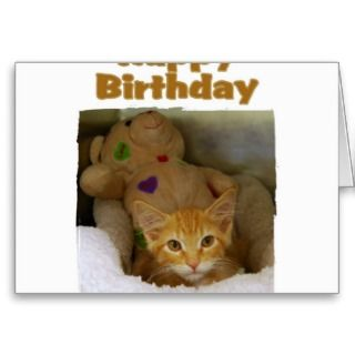 Happy Birthday Kitten Greeting Cards