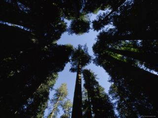 Redwood Trees in Lady Bird Johnson Memorial Grove, California Photographic Print by James P. Blair