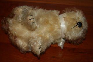 Steiff Hund Molly mit ff Knopf • 17 cm • 1925 43 • dog