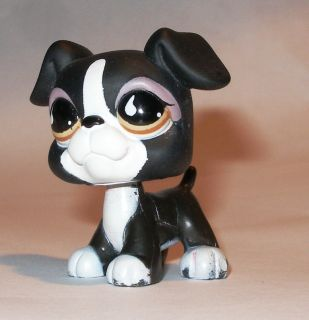 U0189 Littlest Pet Shop 826   Hund, Dog, Boxer
