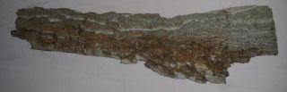 Reptilien Set XL mit 14 Artikel, über 50€ Wert, Reptilienzubehör