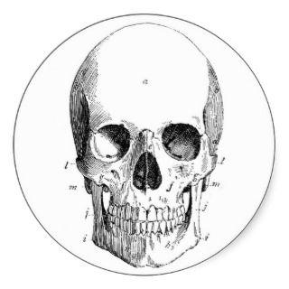 Skull Diagram Stickers