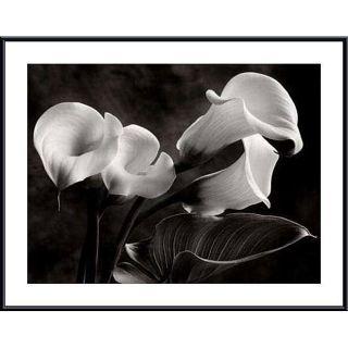 Sondra Wampler Calla Lilies No. 1 Oversize Metal Framed Print