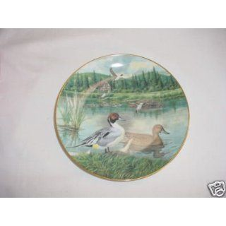 The Pintail by Bart Jerner Collector Plate Everything