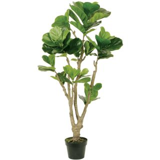 foot Tall Fiddle Leaf with Pot